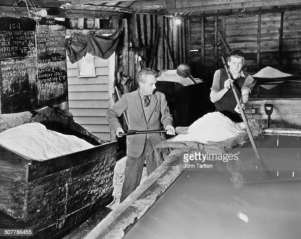 Osborne shovelling salt from an evaporation pan into a storage bunker at the Maldon Crystal Salt Company works, Maldon, Essex, 24th November 1948....