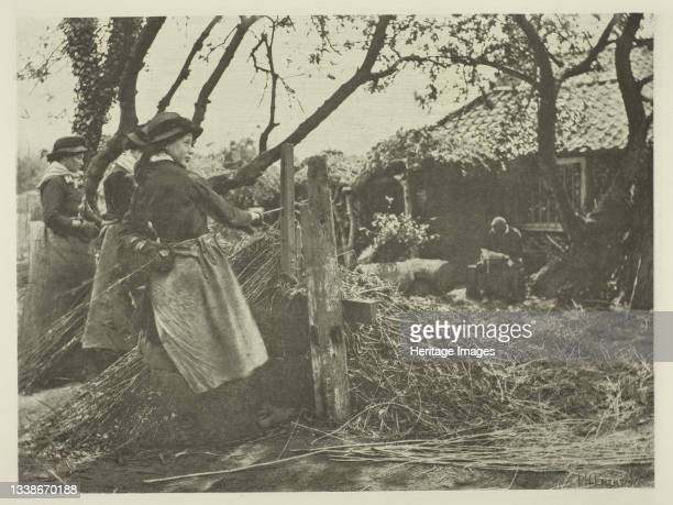 Osier-Peeling , circa 1883/87, printed 1888. A work made of photogravure, pl. Xiv from the album 'pictures of east anglian life' . Artist Peter Henry...