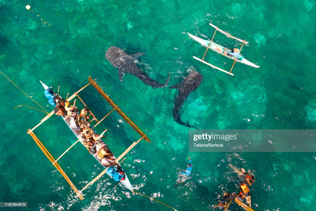 Oslob Whale Shark Watching in Philippines, Cebu Island. Tourists are watching whale sharks : Stock Photo
