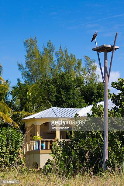 Osprey Pandion haliaetus guarding birds nest by beachfront winter home South Seas Island Resort Captiva Island Florida USA