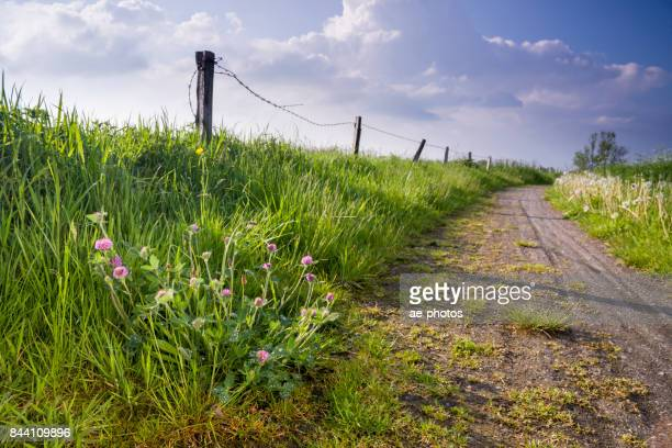 Ostfriesische Landschaft Mit Weg Und Klee