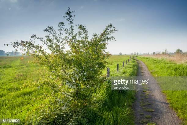 Ostfriesische Landschaft Mit Weg Und Strauch