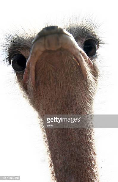 ostrich - ugly bird stock pictures, royalty-free photos & images