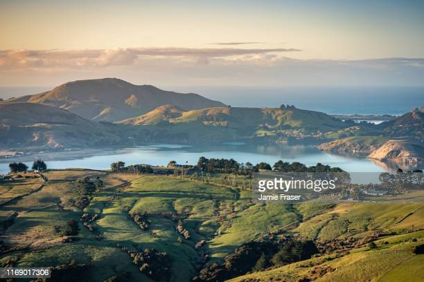otago peninsula and rolling hills and farmland, dunedin, new zealand - dunedin new zealand stock pictures, royalty-free photos & images