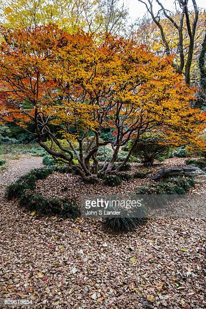 Otaguro Garden is part of the estate of Moto Otaguro the musician critic and scholar who introduced Debussy to Japan The garden is famous for its 80...