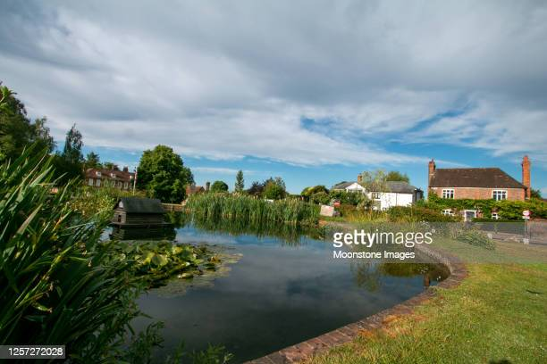 otford pond in kent, england - reed grass family stock pictures, royalty-free photos & images
