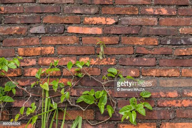 Other bricks in the wall