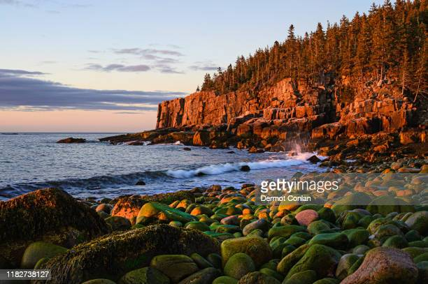 otter cliff at sunrise in acadia national park, usa - cliff stock pictures, royalty-free photos & images