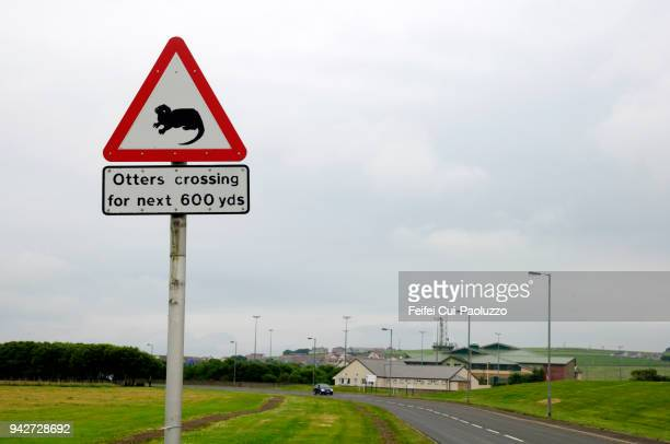 otters crossing sign at kirkwall, orkney, scotland - animal crossing stock pictures, royalty-free photos & images