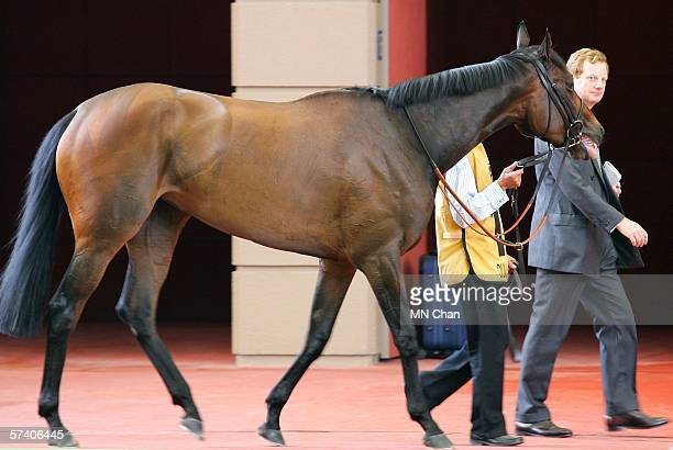 Ouija Board and the owner Lord Derby attend the Audemars Piguet Queen Elizabeth II Cup at Shatin Racecourse April 23 2006 in Hong Kong China