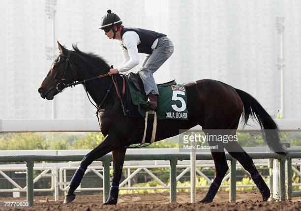 Ouija Board from Great Britain gallops on the all weather track during trackwork for the Hong Kong International Races at Sha Tin December 8 2006 in...