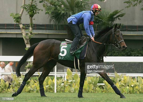 Ouija Board from Great Britain works lightly on the grass track during trackwork for the Hong Kong International Races at Sha Tin December 7 2006 in...