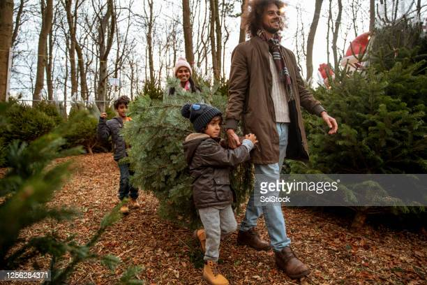our chosen christmas tree - walking stock pictures, royalty-free photos & images