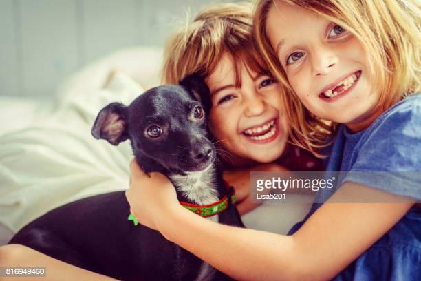 our cute pup - pinscher nano foto e immagini stock