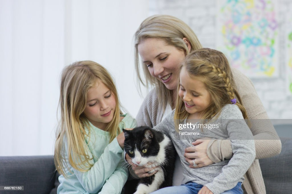 Our New Cat : Stock Photo