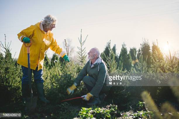 our small evergreen nursery and christmas tree farm - christmas tree farm stock pictures, royalty-free photos & images