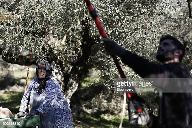 Ourania Kaneli a farmer, left, directs workers during the annual olive harvest on farmland in the Kalamata district village of Kardamyli, Greece, on...