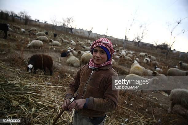 Ousama a 10yearold boy grazes sheep at a farm near the rebelheld town of Douma on the eastern edges of the Syrian capital Damascus on January 5 2016...