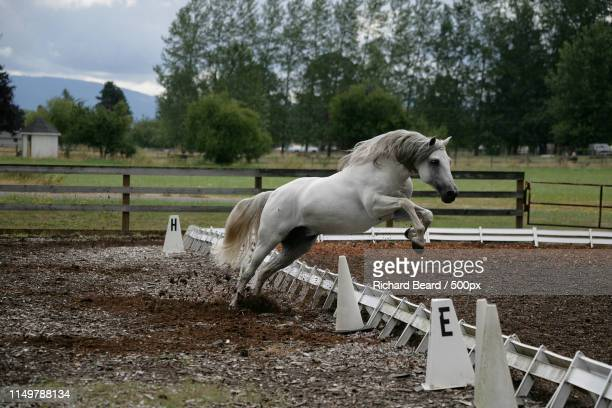 out of bounds - equestrian show jumping stock pictures, royalty-free photos & images