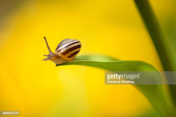 out on a limb - garden snail stock photos and pictures
