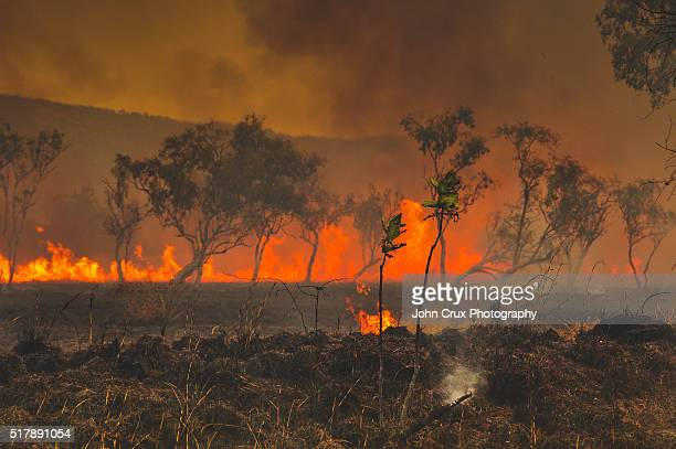 outback bush fires - bushfires stock photos and pictures