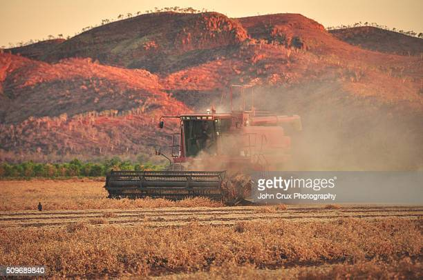 Outback harvesting