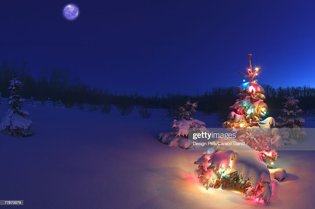 Outdoor Christmas Tree At Night Stock Photo