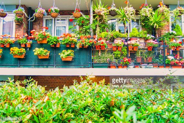 outdoor garden of flower boxes in london - balcony stock pictures, royalty-free photos & images