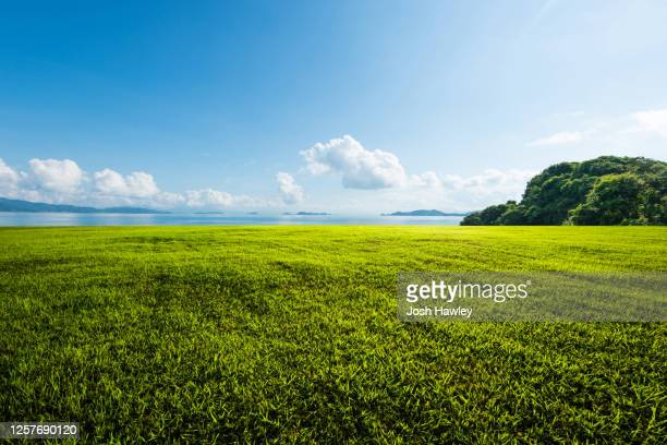 outdoor grassland - lawn stock pictures, royalty-free photos & images
