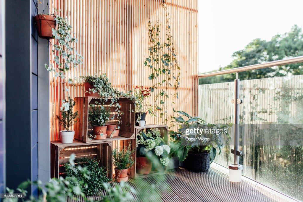 Outdoor plants in balcony : ストックフォト