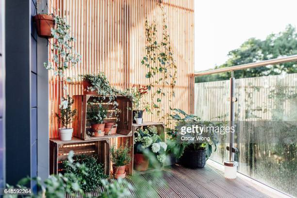 outdoor plants in balcony - sober leven stockfoto's en -beelden