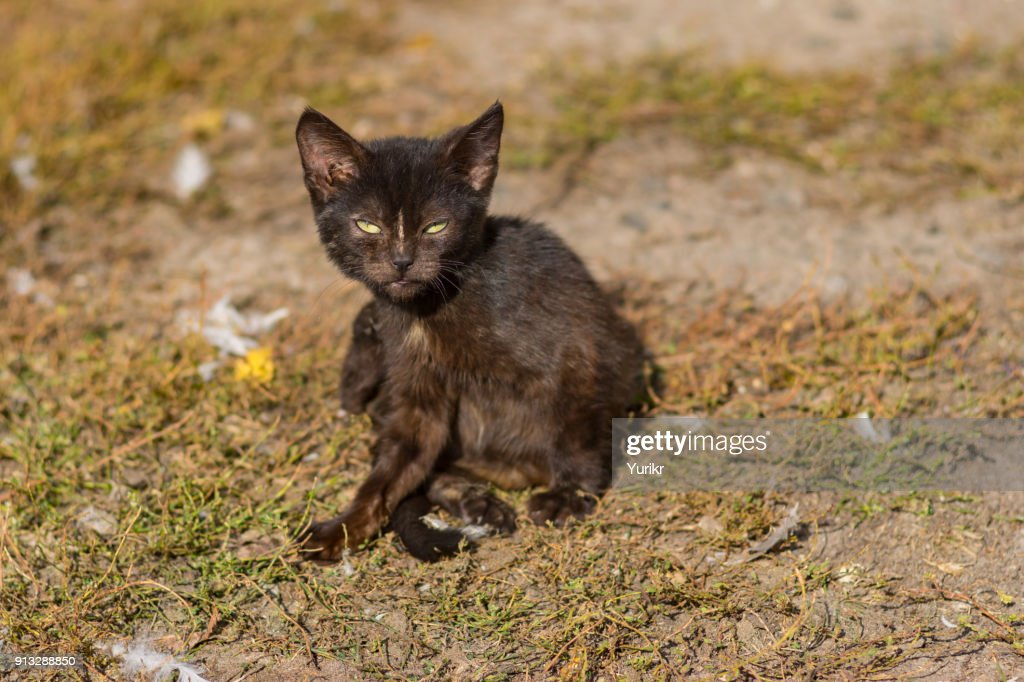 Outdoor portrait of young cat horrifying the poultry-yard : Stock Photo