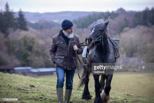 outdoor pursuits - horse stock pictures, royalty-free photos & images