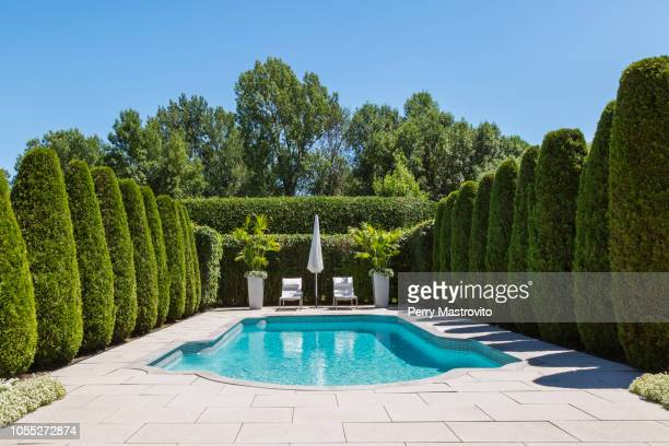outdoor swimming pool with parasol and lounge chairs, bordered by rows of cedar trees, in luxury residential backyard - simetría fotografías e imágenes de stock