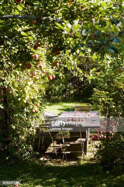 outdoor table in apple orchard - fruit tree stock pictures, royalty-free photos & images