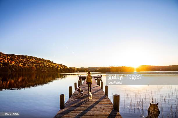 outdoor with dogs in the nature by a lake, canada - pier stock pictures, royalty-free photos & images