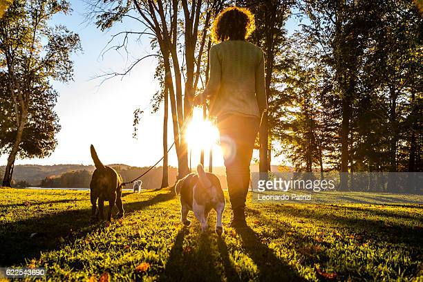 outdoor with dogs in the nature by a lake, canada - andando - fotografias e filmes do acervo
