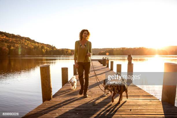 outdoor with dogs in the nature by a lake, canada - autumn dog stock pictures, royalty-free photos & images