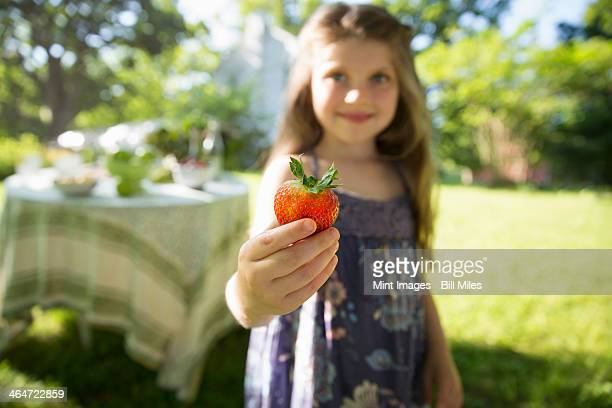 Outdoors in summer. On the farm. Children and adults together. A young girl holding a large fresh organically produced strawberry fruit.