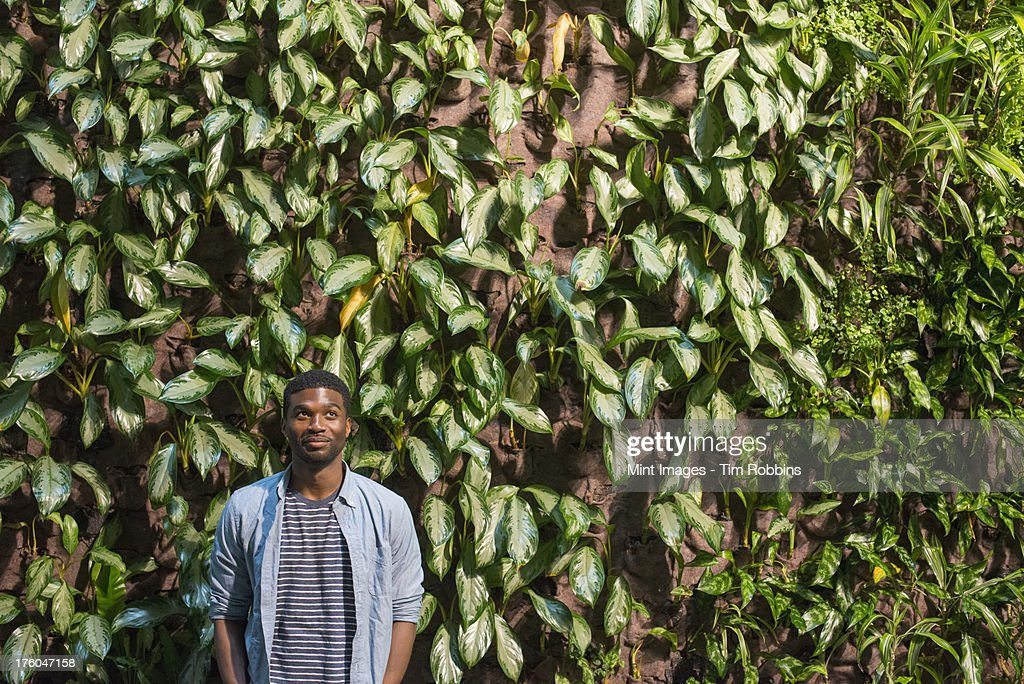 Outdoors in the city in spring. An urban lifestyle. A man standing in front of a wall covered in climbing plants and ivy. : Stock Photo