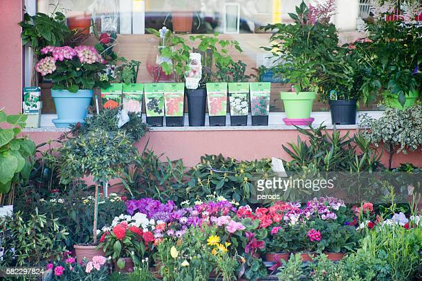Outdoors retail display of flower pots, flower shop.