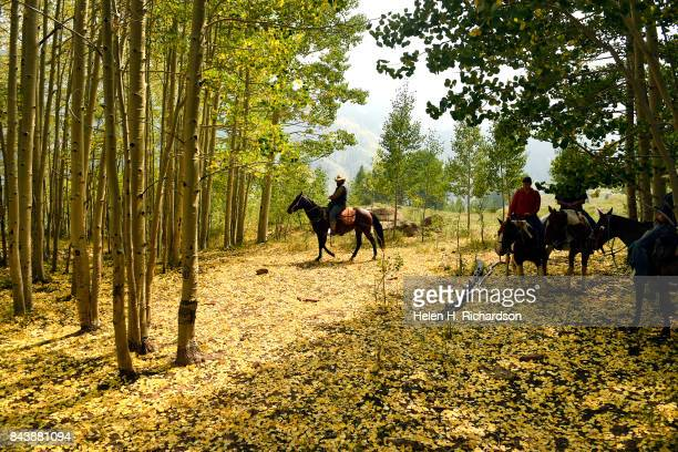 WILDERNESS CO SEPTEMBER 6 Outfitter Jared Wester middle leads riders through a beautiful Aspen grove during a trail ride along Upper Capitol Creek...