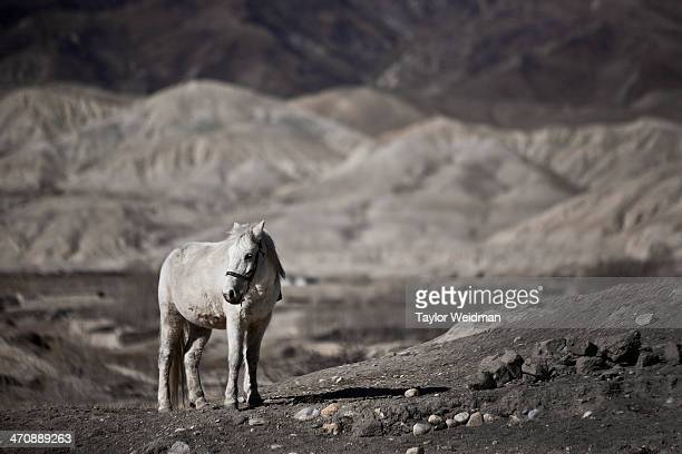 Outside of Lo Manthang. Hidden in the rain shadow of the Himalaya in one of the most remote corners of Nepal lies Mustang, or the former Kingdom of...