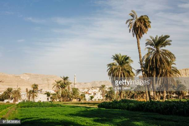 outskirts of minya - minya egypt stock pictures, royalty-free photos & images