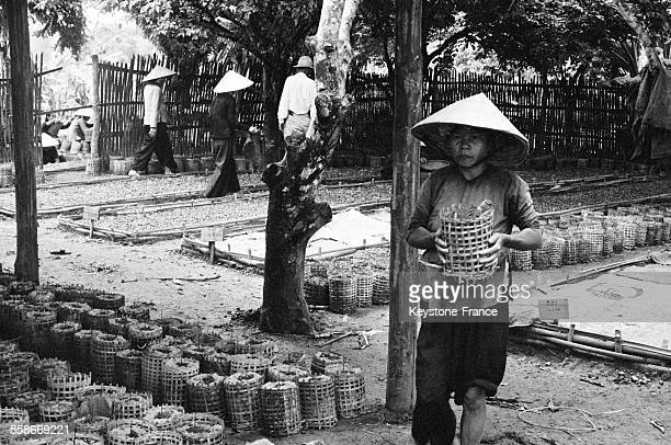 Ouvrière transportant une jeune pousse d'hévéa dans une plantation d'hévéas au Vietnam en juillet 1959.
