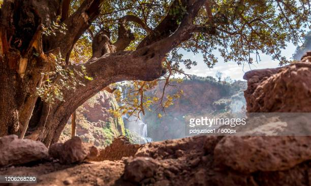 ouzoud waterfalls behind trees, tabia, morocco - behind waterfall stock pictures, royalty-free photos & images