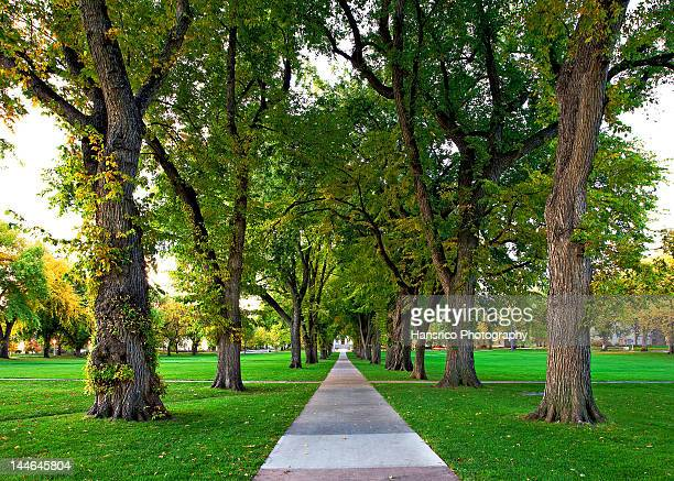 oval at colorado state university - fort collins stock pictures, royalty-free photos & images