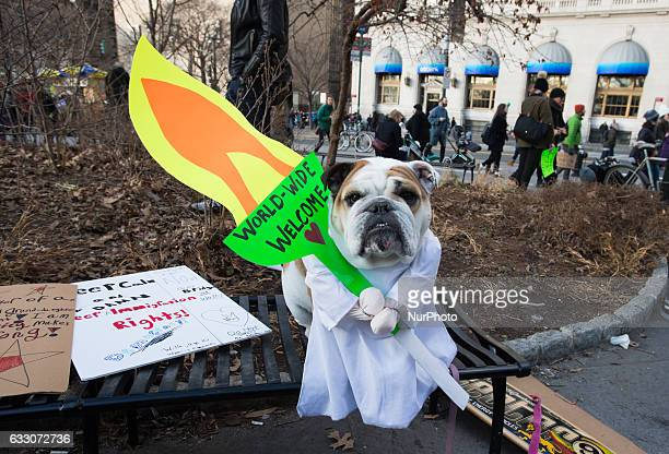 Over 10 Thousand New Yorkers March from Battery Park in a #NoBanNoWall protest in New York United States on January 29 2017 following President...