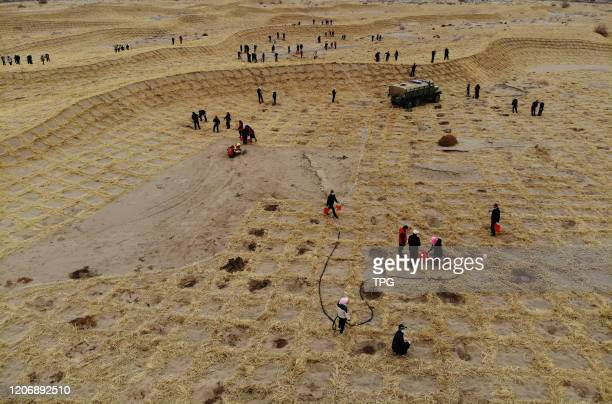Over 1600 people are planting trees on the straw sand barriers on 12th March, 2020 in Wuwei,Gansu,China.
