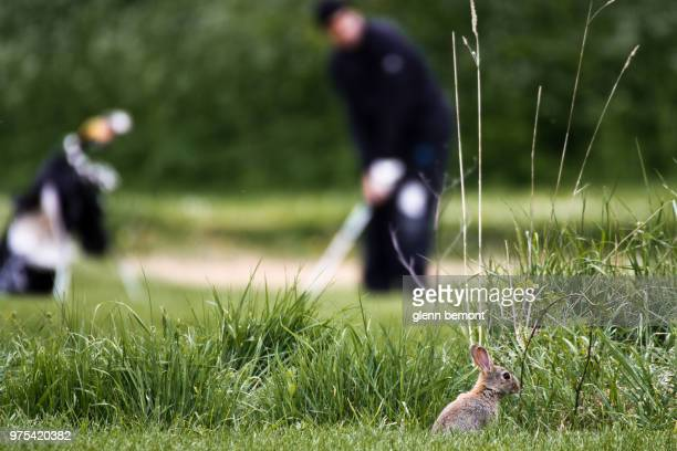 5 over par is a bunny - eagle golf stock pictures, royalty-free photos & images